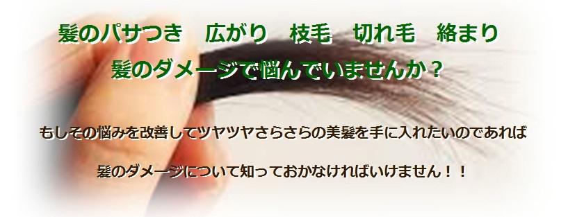 髪の パサつき 広がり 枝毛 切れ毛 絡まり